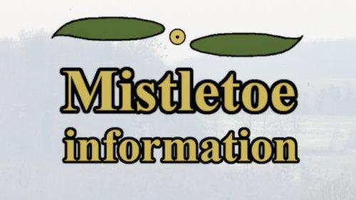 Mistletoe information