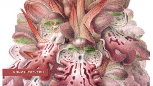 hyacintorchis een nieuwe orchidee Esmee Winkel