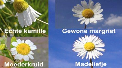 Moededag bloemen