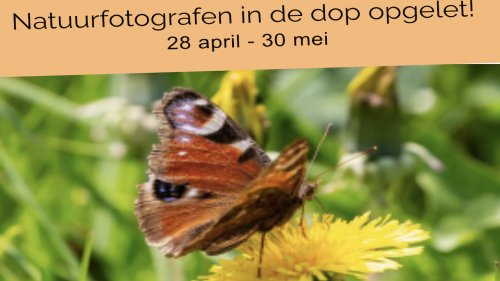 Flora van Nederland NIBI Pollennieuws