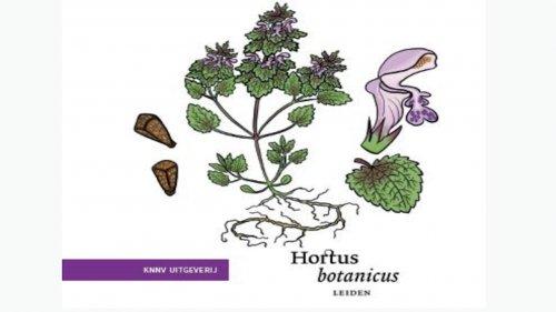 Zakgids stoepeplanten Flora van Nederland