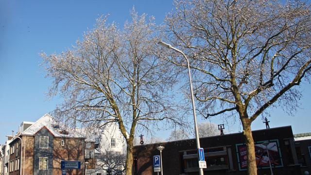 bomen met veel sierwaarde