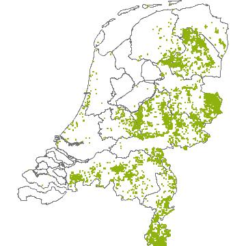 Grote Foto Aan De Muur.Flora Van Nederland Grote Muur Stellaria Holostea